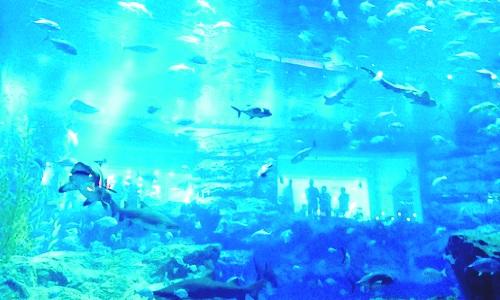 Dubai Aquartum, the biggest in the world